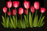 тюльпаны на 8 марта с доставкой